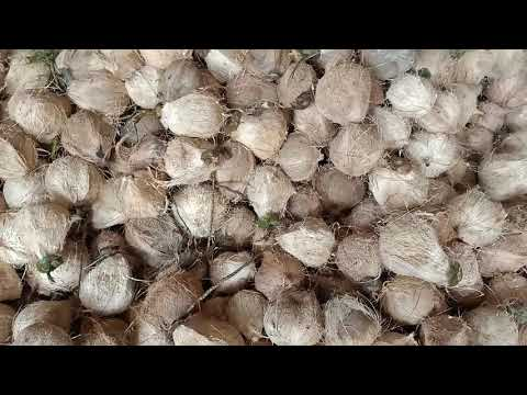 Cung cấp dừa khô Bến Tre _ 0913 197 936