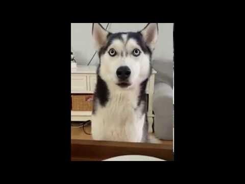 כלב מתחנן בפני בעליו לקבל שאריות מהחלק הקשה של הפיצה