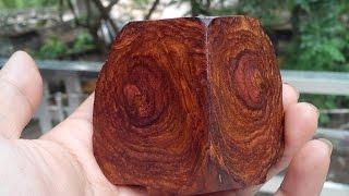"""Giải mã """"bí mật"""" tại sao cây gỗ sưa 'đắt hơn vàng?"""