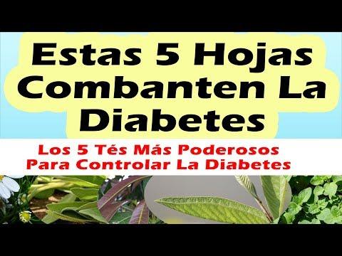 Perros para los diabéticos