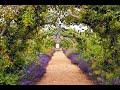 The path of flowers----Alpha Canis Majoris