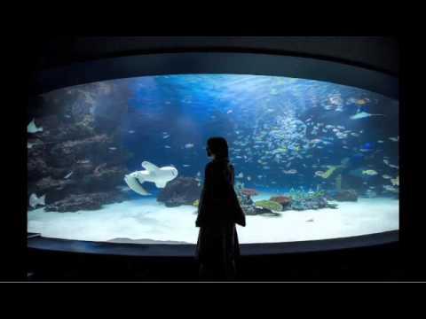 坂本美雨 - In Aquascape