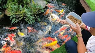 Hồ cá Koi tuyệt đẹp trong khu biệt thự trăm tỷ Vinhomes dưới chân tòa nhà Landmark 81