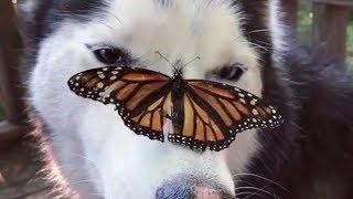 СМЕШНЫЕ ЖИВОТНЫЕ Лучшие Приколы с Животными ПРИКОЛЫ с Котами и Собаками Калейдоскоп за 29 07 2018