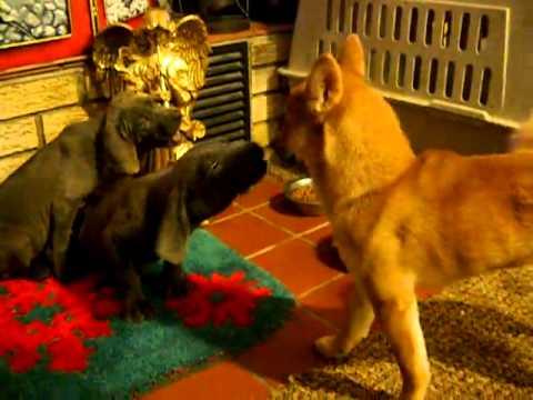 Gunter  and Greta on video!