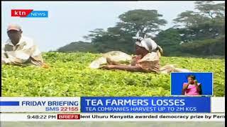 Tea farms in Kericho, Nandi Hills and Limuru continue to suffer losses from tea farmers strike