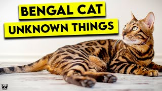 These Are The Top Things You Need To Know About Bengal Cats