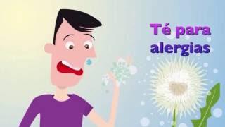 Té Para Aliviar Los Síntomas De Las Alergias Estacionales