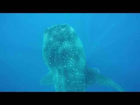 Gran Bahia Principe Tulum 2017 – Whale Shark Daddy Excursions