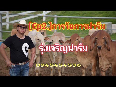[Ep2 ]การจัดการฟาร์มระดับเทพ  รุ่งเจริญฟาร์มRCR