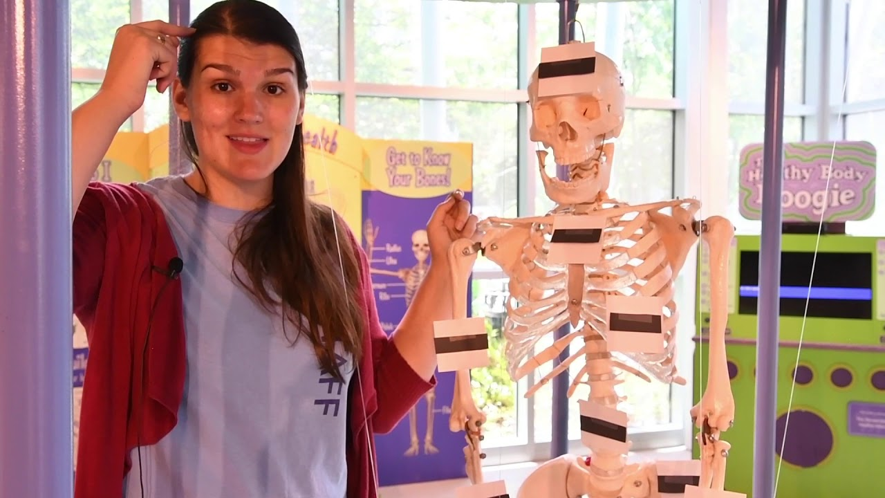 The Skeletal System Part 1 Feature Image