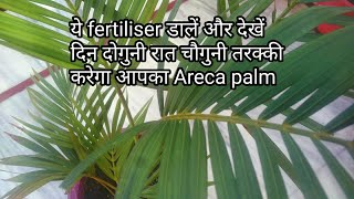 Areca palm care tips/Best organic fertiliser for Areca palm