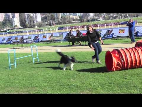 DOG PRO – Expo Mascotas & Animales Viña 2014 – Amazing dogs