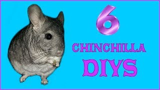 6 CHINCHILLA DIYS