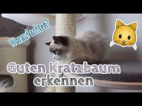 Worauf achten beim KRATZBAUM KAUF? Guten Kratzbaum für Katze finden! Tipps!