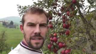 Rundgang im Hochstamm Obstgarten
