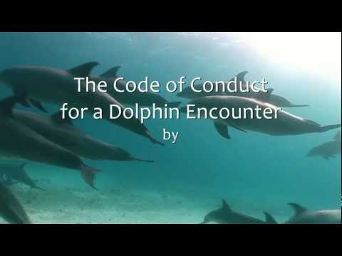 How to correctly behave during a dolphin encounter at sea? Please, follow the Code of Conduct to protect dolphins and bring Red Sea regulations in-line with international standards.