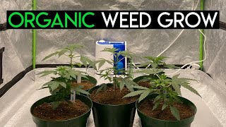 Growing Cannabis With Organic Nutrients: Germination, Amending Mediums, Transplanting and Topping