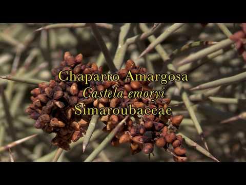 Tratamentul cu viermi rotunzi la om