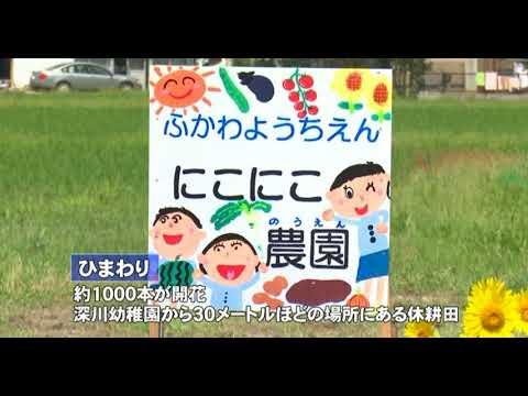 深川幼稚園 ほっちゃTVニュースひまわり迷路