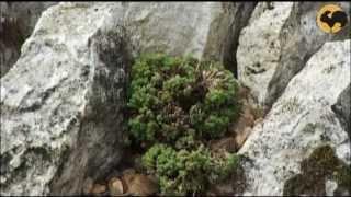 Создание альпинария видео