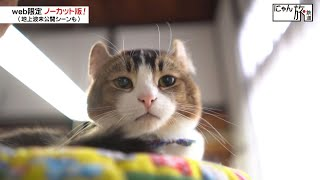 Vol.49「にゃん旅鉄道」施設長 退職にゃ!