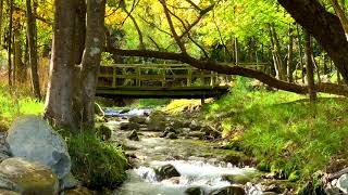 Beautiful River Sounds in Summer Forest, Water Sounds, Stream Sound for Sleeping, Relaxing, Studying