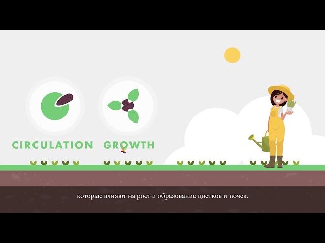 Важнейшее влияние микроэлемента бора в сельском хозяйстве