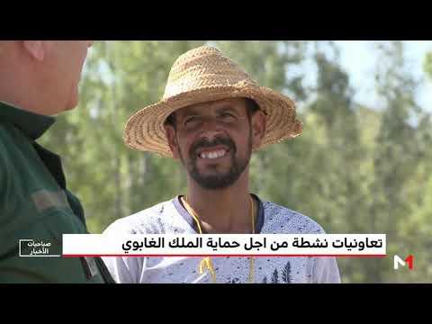 العرب اليوم - شاهد: تعاونيات نشطة من أجل حماية الملك الغابوي