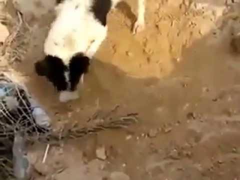 Rơi nước mắt trước cảnh chú chó chôn xác con