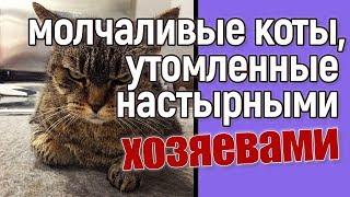 Молчаливые коты, утомленные своими хозяевами — прикольные фото