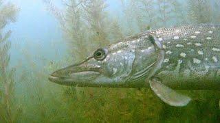 Jezioro Nieslysz - charakterystyka łowiska