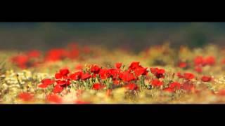 Haarp Cord - Primavara (feat. Chimie)