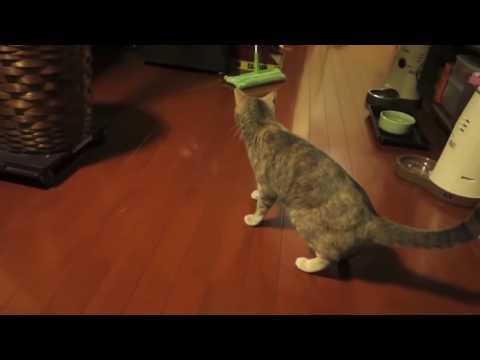 A este gato no le gusta nada este artículo de limpieza! Gato asustado - Videos de Risa Gatos y