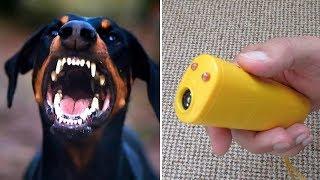 Отпугиватель собак - испытания на практике