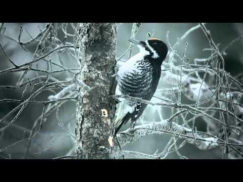 Fargo Season 2 (Teaser 'Peck, Peck.. Boom, Boom..')