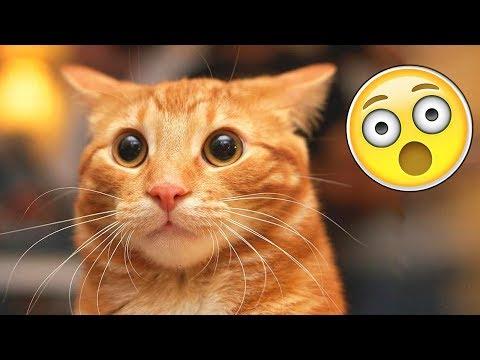 , title : 'Я РЖАЛ ПОЛ ЧАСА |Смешные Коты и Собаки | ПРИКОЛЫ С ЖИВОТНЫМИ | Cute Cats'