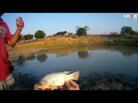 Plantando capim e pescando o jantar
