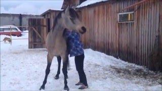 Запрыгивания на лошадей разного роста.