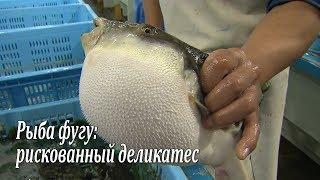 Рыба фугу: рискованный деликатес / Fugu-fish: risky Japanese delicacy / フグ