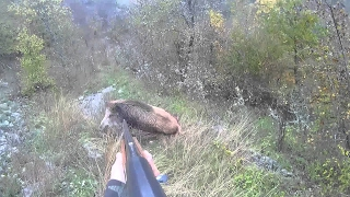 Driven Wild Boar Hunting | Pissed Off Charging Boars   Ultimate Hunting