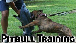 How to Train a Pitbull Puppy (Dog Training)