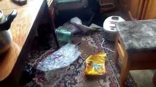 Хаски Флёр и погром в квартире