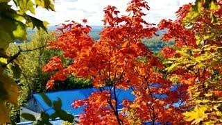 Осень,снова осень в нашем спасотряде