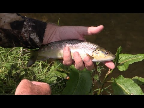 Small Stream Fly Fishing Tips - EAST BURTON ESTATE CHALK STREAM  + Top Fishing Tips from Simon Kidd
