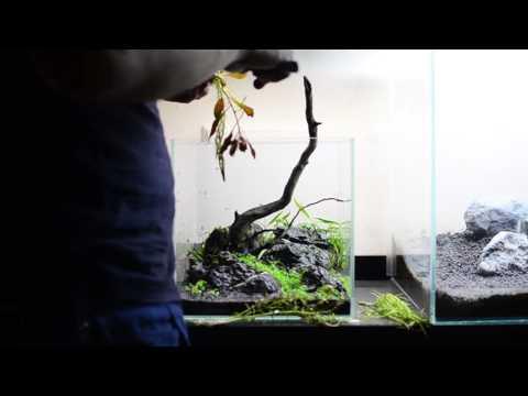 Step-By-Step Nano Aquascape: