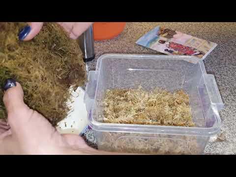 Семена из Японии от Анюты! Мой непентес. Посев семян саррацении и непентеса.