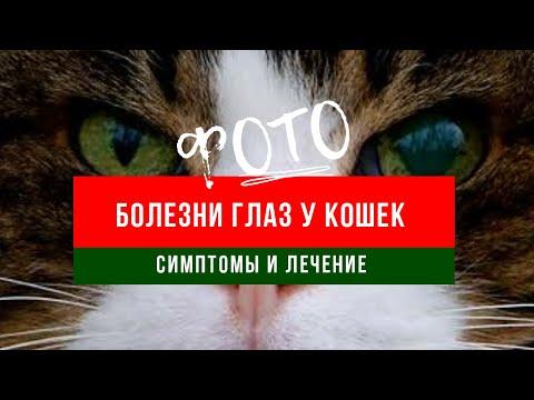 Болезни глаз у кошек |фото - симптомы и лечение