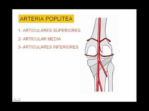 Kettlebell rafforza articolazioni