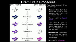 Lab Exercise 3: Heat Fixing and Gram Staining